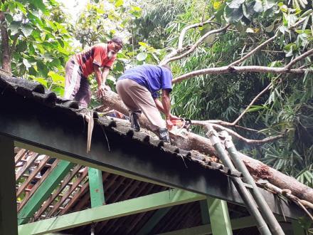 Warga Sapuangin Gotongroyong Bersihkan Pohon Tumbang