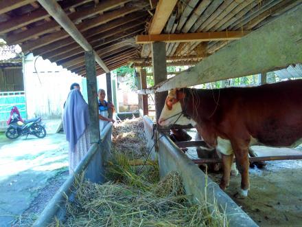 Pemanfaatan lahan kosong untuk Peternakan Sapi dan Kambing